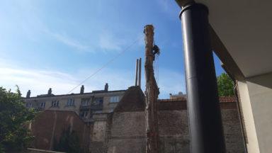 Saint-Josse : l'abattage des arbres de la Nouvelle école a débuté