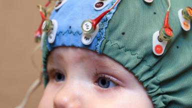 Le cerveau humain armé pour détecter les serpents dès le plus jeune âge, selon l'ULB