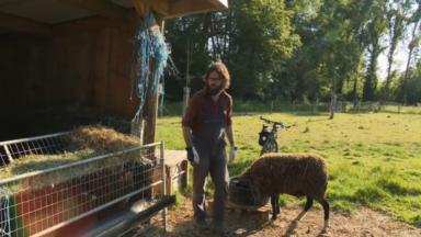 Berger urbain, David élève des moutons à Bruxelles