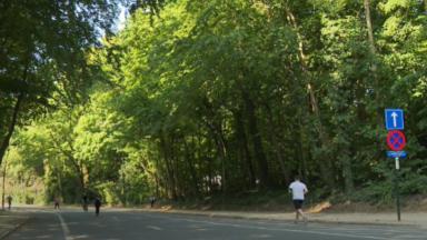 Bois de la Cambre : Uccle pose ses balises et demande un équilibre entre impératifs de mobilité et besoin d'espaces verts