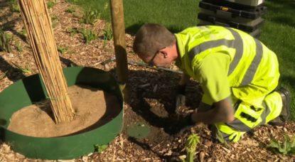 Jeunes arbres - Analyse hydrique système intelligent - Capture BX1