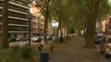 Arbres de voirie : un Bruxellois alerte sur les dégâts de la sécheresse