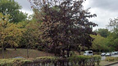 Woluwe-Saint-Lambert : près de 250 arbres dangereux doivent être abattus, la commune s'inquiète