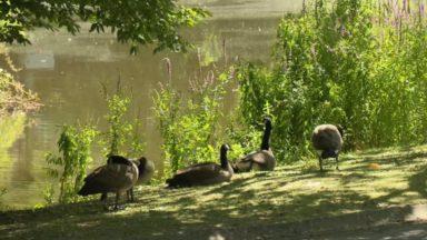 La biodiversité continue de diminuer à Bruxelles, rapporte Natagora