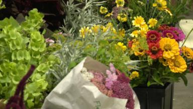 L'ASBL Marie Poppies tente de développer la production de fleurs écoresponsables à Bruxelles