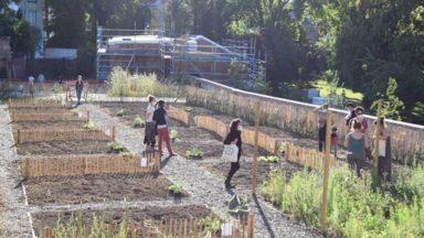 Etterbeek : trente parcelles potagères au jardin Jean-Félix Hap