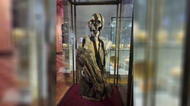 Le Musée Art et Histoire défend l'authenticité de sa momie Rascar Capac face à Pairi Daiza