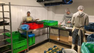 Microflavours installe sa ferme urbaine à Molenbeek