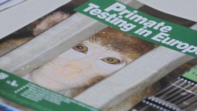 La Région bruxelloise s'engage à diminuer le nombre d'animaux de laboratoire