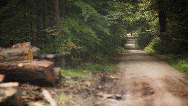 Une soixantaine d'obus découverts en forêt de Soignes