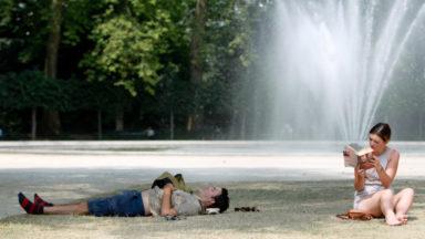 Vague de chaleur: les insectes se multiplient avec la hausse des températures