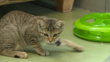 Les refuges débordent d'animaux candidats à l'adoption
