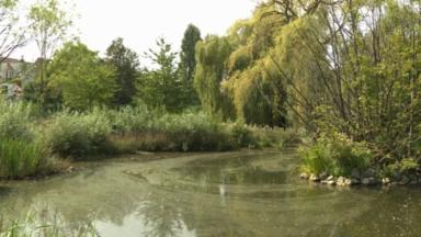 Canicule : la sécheresse est néfaste pour les étangs et les cours d'eau