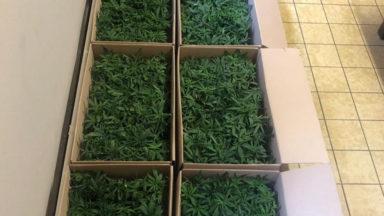 Deux individus arrêtés à Bruxelles après la découverte d'une cargaison de cannabis