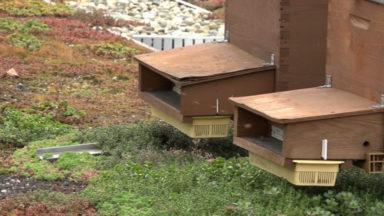 Des abeilles sur le toit du Docks Bruxsel permettent d'analyser la qualité de l'environnement