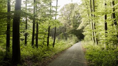 Rafales de vent violentes : la forêt de Soignes et le parc Josaphat fermés ce mercredi