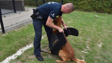 Un chien policier permet l'arrestation d'un dealer présumé