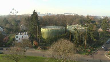 Arbres abattus sur le site de Vivaqua à Laeken : une séance d'information aura lieu le 7 janvier