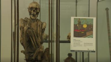 Un inventaire des restes humains réalisé dans les collections belges des musées
