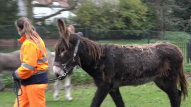 Schaerbeek : le parc Josaphat accueille de nouveaux animaux