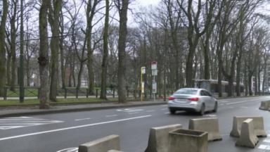 Abattage d'arbres à Koekelberg : la STIB s'explique, les riverains se mobilisent