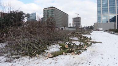 L'abattage de centaines d'arbres à la Cité administrative crée la discorde