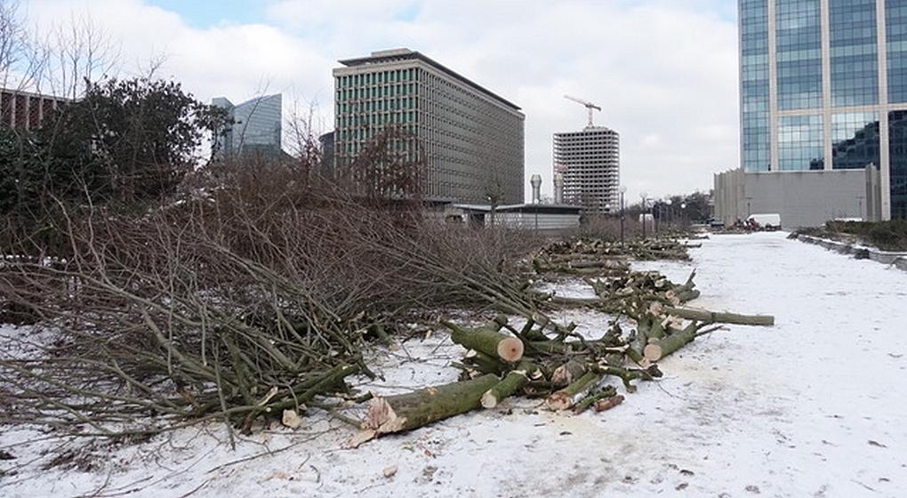Arbres abattus Cité Administrative Bruxelles - Photo Comité de Quartier Notre-Dame-aux-Neiges