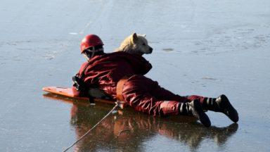 Anderlecht : les pompiers sauvent un chien bloqué dans les étangs de Neerpede