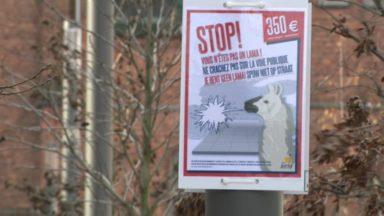 """Jette : """"Stop vous n'êtes pas un lama"""", la commune à la chasse aux crachats"""