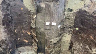 Un tonneau du 14e siècle trouvé à la Rue du Marais