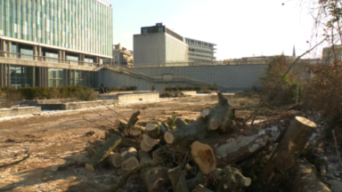 Bruxelles-Ville : des centaines d'arbres abattus devant l'ancienne cité administrative