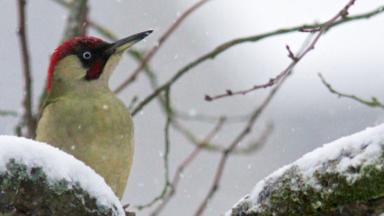 Comment la vague de froid a-t-elle impacté les oiseaux de nos jardins ?