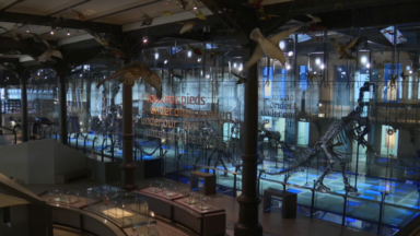 Avec un studio virtuel, le Musée des sciences naturelles se réinvente