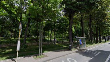 Koekelberg : 25 des 26 arbres de l'arrêt Besme sont sauvés