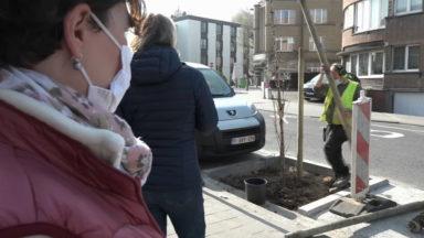 Auderghem : 17 arbres plantés avenue Joseph Chaudron grâce à une initiative de quartier