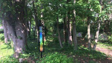 Le kaléidogarden, un jardin dédié aux plantes pour teindre le textile, arrive à Forest