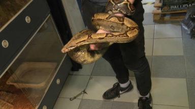 422 espèces de reptiles autorisées à domicile à partir du 1er juin à Bruxelles
