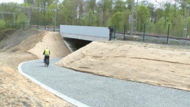 Forêt de Soignes : un nouveau tunnel pour les animaux et promeneurs