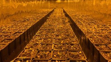 3 plantations de cannabis découvertes par la Zone de Police Bruxelles Nord