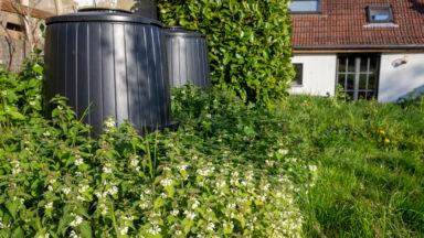 Woluwe-Saint-Lambert lance une prime pour aménager une mare dans votre jardin