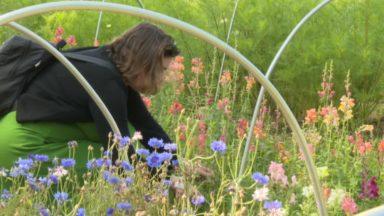 FleurAkker : composer son bouquet de fleurs en les cueillant dans les champs