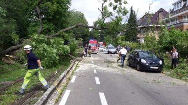 Laeken: les trams 3, 7 et 19 interrompus après la chute d'un arbre sur la voie publique