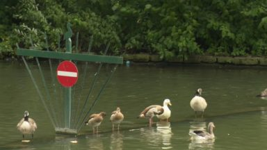 Anderlecht : malgré une bactérie, l'eau des étangs Marius Renard retrouve ses couleurs
