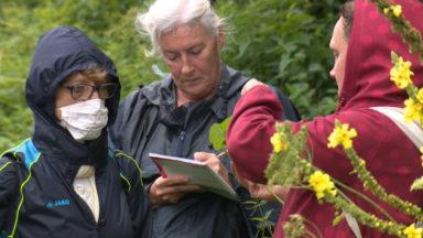 De la terre à l'assiette : des ateliers sur les plantes sauvages comestibles à Etterbeek