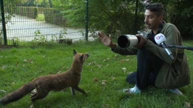 La minute sauvage : à la rencontre de la faune de Bruxelles