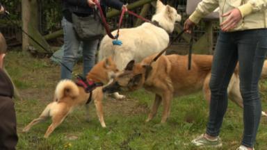 La Ville de Bruxelles lance la première journée du bien-être animal
