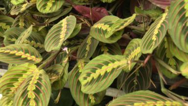Des plantes uniques et originales à vendre pendant trois jours à Tour & Taxis