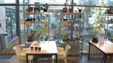 La plantothèque de Jette : des plantes parmi les livres de la bibliothèque